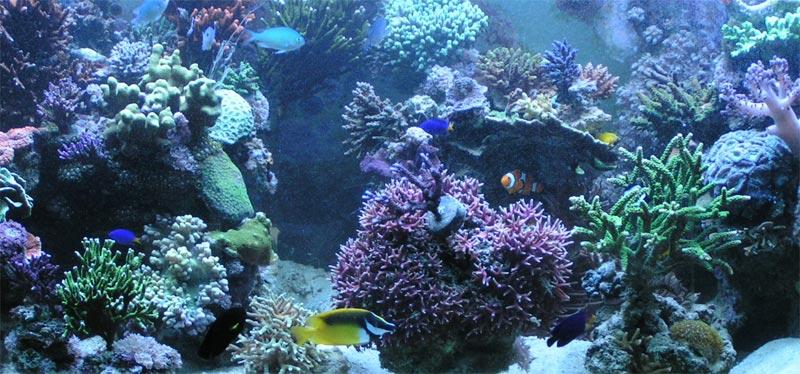 Meerwasseraquaristik und Meerwasseraquarium