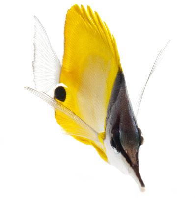 Meerwasser Fisch Bild