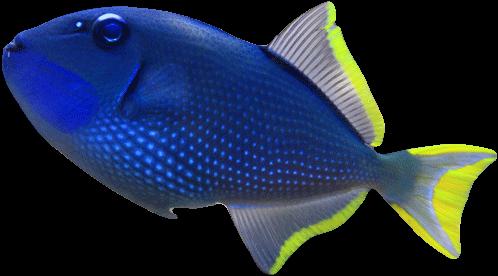 Meerwasserfische Shop