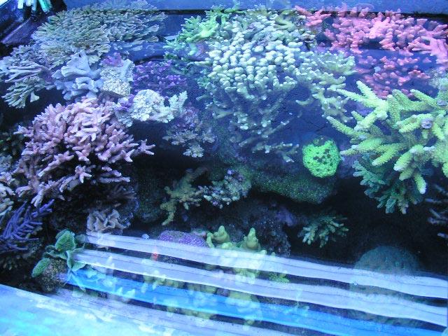 Meerwasseraquaristik Bild Aquarium von oben