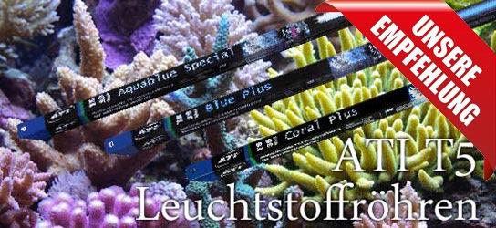 Kategorie T5 Leuchtstoffröhren Meerwasseraquarium