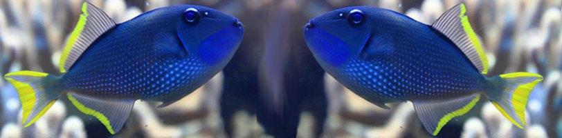Fischfutter in Flockenform Flockenfutter