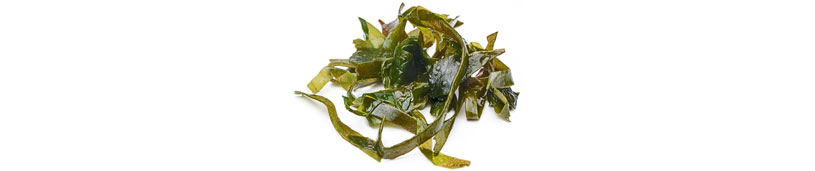 Reine Futteralgen Algen