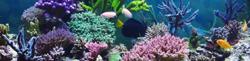 Einzeln und als Komplett-Set Aquarien