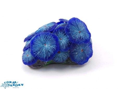 Scheibenanemonen blau   Mushroom Colony blue