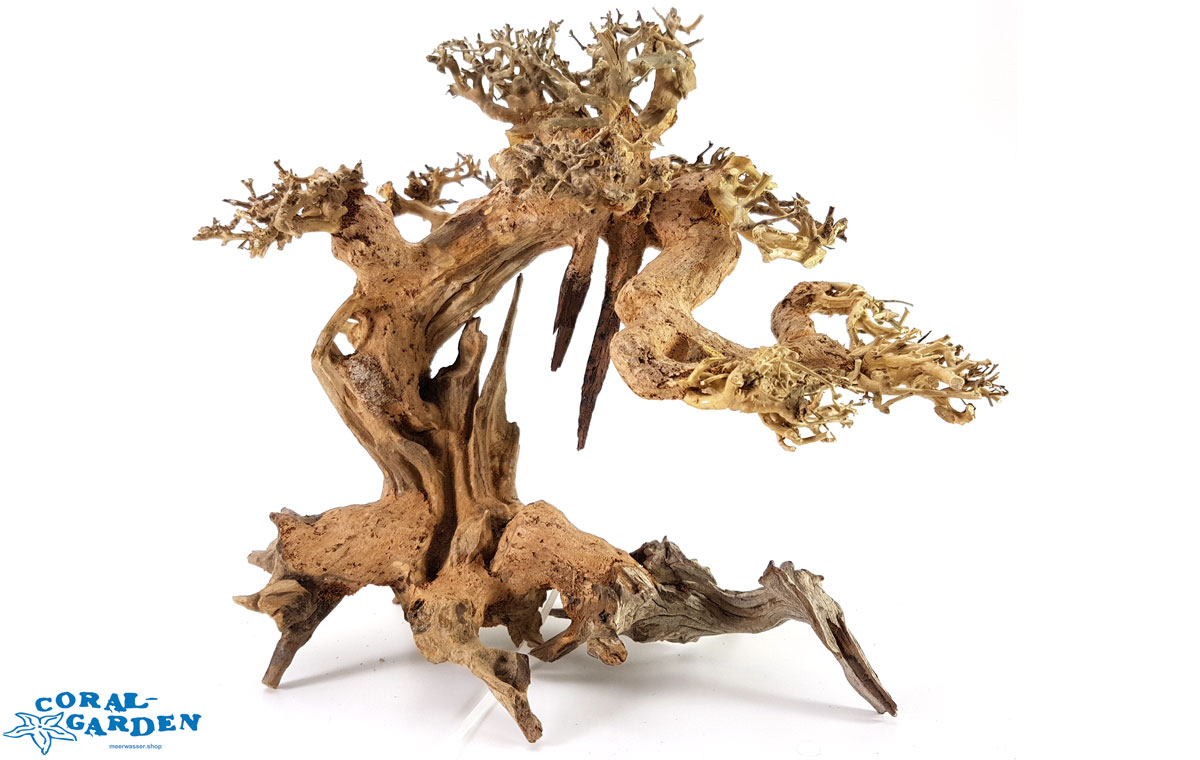 aquarium bonsai baum 25 x 23 x 19 cm b1 in bonsai b umchen. Black Bedroom Furniture Sets. Home Design Ideas