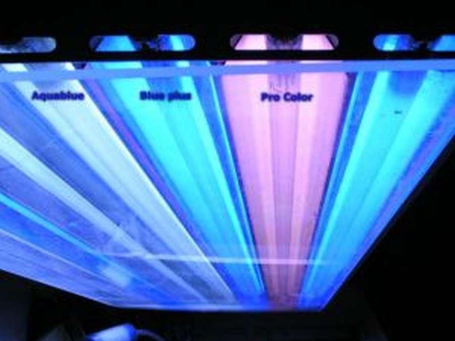 Ati T5 Leuchtstoffr 246 Hre Blue Plus In Ati T5 R 246 Hren