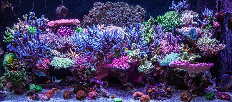 Bild von einem Meerwasseraquarium