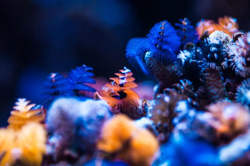 Bild Bewohner im Meerwasseraquarium