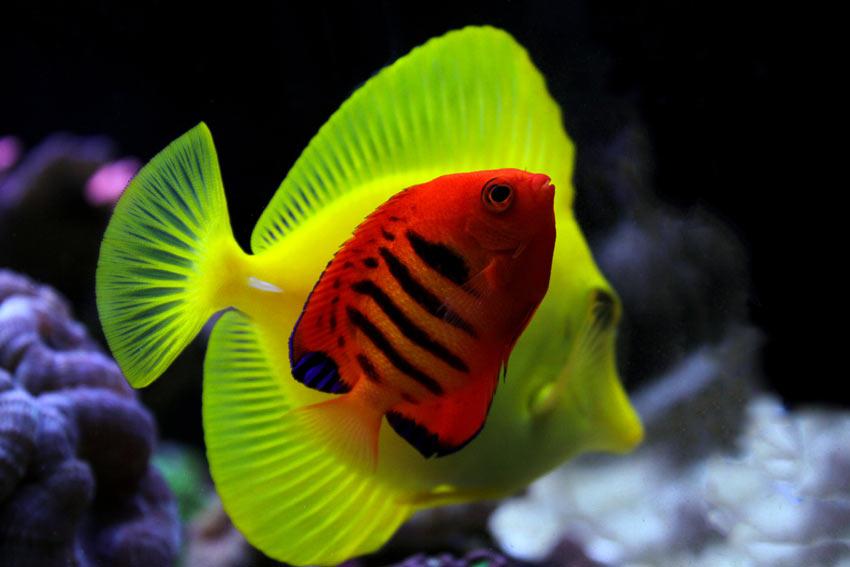 Bild von bunten Meerwasserfischen im Aquarium