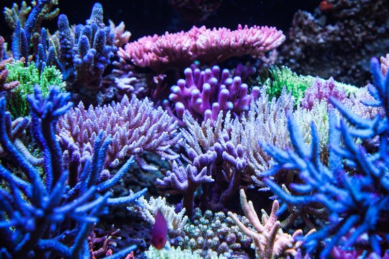 Bild tolles Meerwasseraquarium